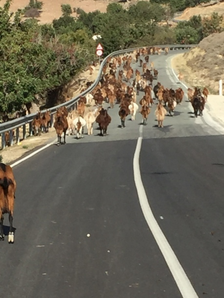 Road to Akoursos with lots of goats