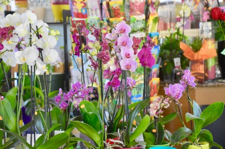 Colourful orchids