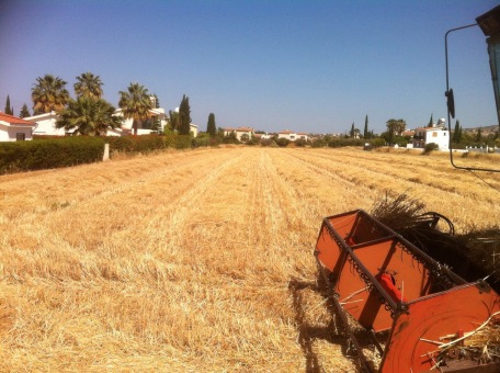 Field following harvest