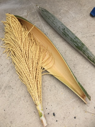 Palm Pod